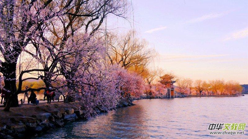 春到颐和园 拍客眼里最美的景色