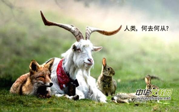 然而,近代世界人类对于动物的迫害无论是在数量上,范围上,程度上都